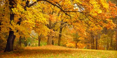 The Best Ways to Care for Your Trees, Stamford, Connecticut