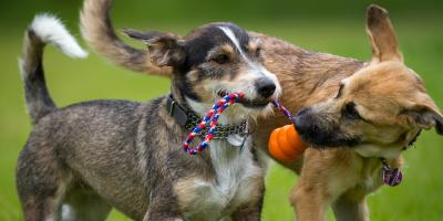 3 Important Reasons to Opt for Spay & Neuter Procedures for Your Pet, Amsterdam, Virginia