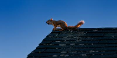 Why Squirrel Removal Is Vital to Protecting Your Home, Caddo Mills, Texas