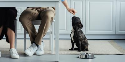 4 Great Flooring Options for Your Dog, West Whitfield, Georgia