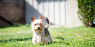 Top 3 Pet-Friendly Fencing Solutions, Ewa, Hawaii