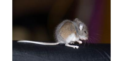 Diseases Caused By Rodents & Other Pests & How to Treat Them, Onalaska, Wisconsin