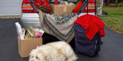 4 Reasons to Plan Holiday Pet Boarding Ahead of Time, Defiance, Missouri