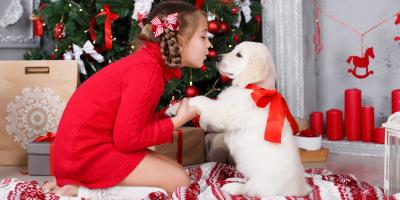 Why Puppies Make Fantastic Christmas Gifts, Defiance, Missouri