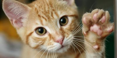 5 Pet Care Tips to Ensure Your Cat Lives a Long & Healthy Life, Wisconsin Dells, Wisconsin