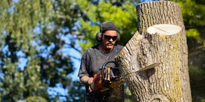 Why You Should Secure Timely Tree Removal, De Motte, Indiana