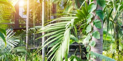 Denver Gardening Experts Explain How Airflow Affects Your Plants, Pueblo, Colorado