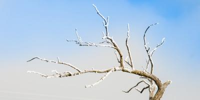Can a Tree Freeze to Death? A Cornelia Arborist Weighs In, Baldwin, Georgia
