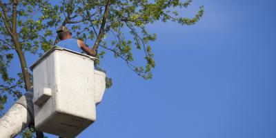 4 Reasons You Need Professional Tree Removal , Milton, Pennsylvania