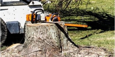 3 Benefits of Removing Tree Stumps, Jessup, Maryland