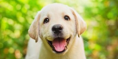 5 Dog Accessories for the Pet Lover in Your Life, Jacksonville East, Florida