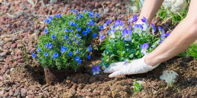 3 Allergy-Friendly Greenery to Add to Your Garden Design, Eldersburg, Maryland