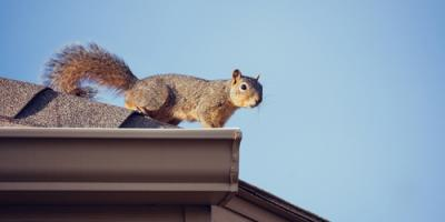 Animal Control Company Shares 7 Telltale Signs of Squirrels in Your Attic, New Milford, Connecticut