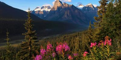 An Urgent Care Clinic on How to Stay Safe Outdoors This Summer, Anchorage, Alaska