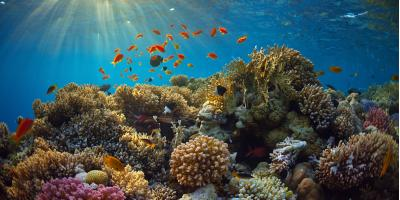 A Brief Guide to Coral Reefs, Lahaina, Hawaii
