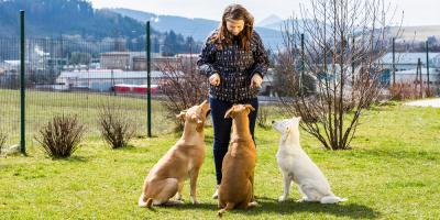 7 Ways to Dog-Proof Your Fence, Hilton, New York