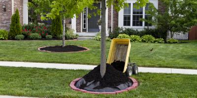 4 Benefits of Placing Mulch Around Trees, Valley Springs, California