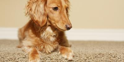 3 Ways Dog Owners Can Keep Carpeting Clean, Anchorage, Alaska
