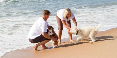 Why Is Pet Quarantine Necessary in Hawaii?, Keaau, Hawaii