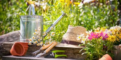 5 Natural Pest Control Methods for Your Garden, Honolulu, Hawaii