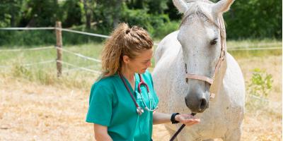 4 Vaccinations That Horses Need, Middlefield, Ohio