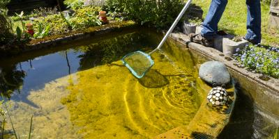 How to Keep Your Pond Clean, East Bloomfield, New York