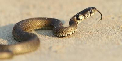 The Do's & Don'ts of Handling Snakes in Your Home, New Milford, Connecticut