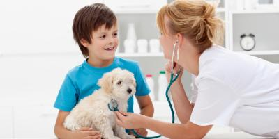 5 Things to Look for in a New Veterinarian, Lincoln, Nebraska
