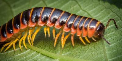 What's the Difference Between Centipedes & Millipedes?, Warner Robins, Georgia