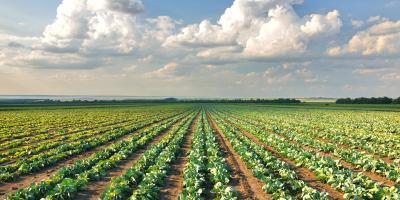 3 Important Benefits of Crop Insurance, Meadville, Pennsylvania