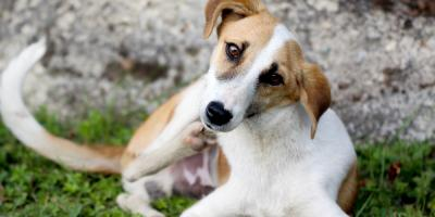 How to Recognize Common Allergies in Dogs & Cats, Hilton, New York