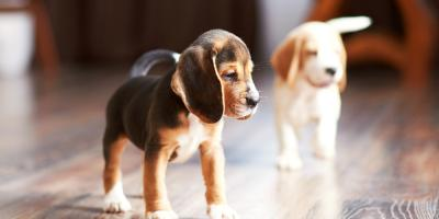 3 Ways To Prevent Hardwood Flooring Damage from Pets, Webster, New York