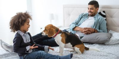 3 Ways a New Pet Can Affect Your HVAC System, Waynesboro, Virginia