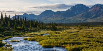 4 Fun Activities to Do in Denali National Park During Fall, Healy, Alaska
