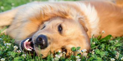 3 Easy Ways to Keep Your Dog Healthy This Spring, ,