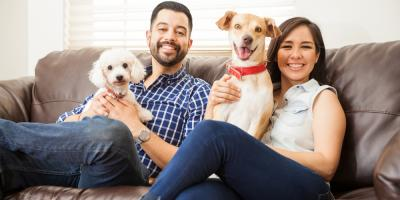 A Moving Service Shares 3 Ways to Keep Pets Calm During a Move, Cincinnati, Ohio