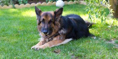 4 FAQ About Arthritis in Dogs , Montgomery, New York