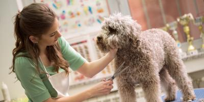 3 Types of Businesses Insurance You Need If You Work With Animals, Beatrice, Nebraska