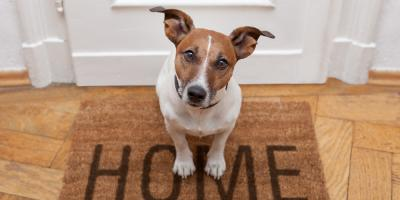Pet Daycare Team Offers 3 Tips to Entertain Your Dog During the Day, Newport-Fort Thomas, Kentucky