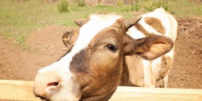 Making Your Fence Wildlife Friendly, Kalispell, Montana