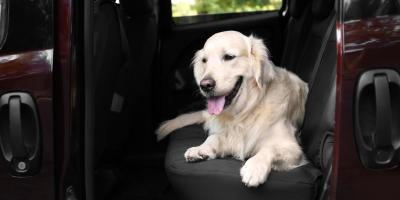 Veterinarian Best Practices for Traveling With Your Canine Companion, Rhinelander, Wisconsin