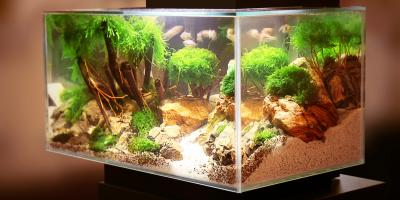 5 Tips for Moving a Large Fish Tank to a New Home, Rochester, New York
