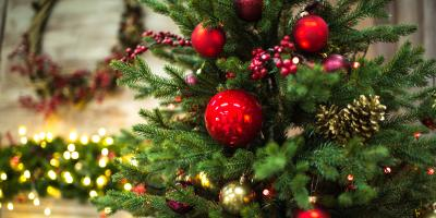 Decking The Halls: 4 Holiday Alternatives to Poinsettias, Branford Center, Connecticut