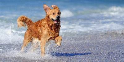 Dos & Don'ts When Taking Your Dog for a Swim, Columbia, Missouri