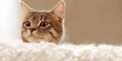 3 Tips for Understanding Your Cat Better, Lincoln, Nebraska