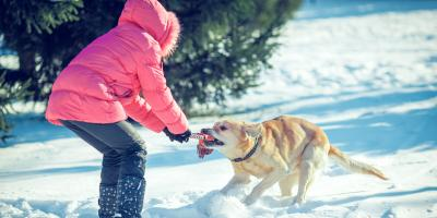 3 Ways to Exercise Your Dog This Winter, Elyria, Ohio