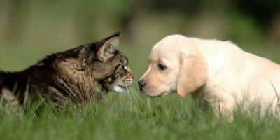 A Veterinarian on 3 Ways to Tell Your Dog or Cat Is Angry, Covington, Kentucky