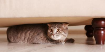 3 Signs Your Pet May Be in Pain, Amsterdam, Virginia
