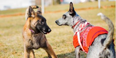 4 Ways to Reduce Separation Anxiety When Pet Boarding, Royse City, Texas