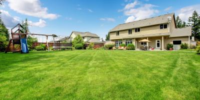 How to Repair Your Yard After Tree Stump Removal, Anchorage, Alaska